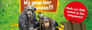 slide-chimpansees-verblijf-dierenrijk
